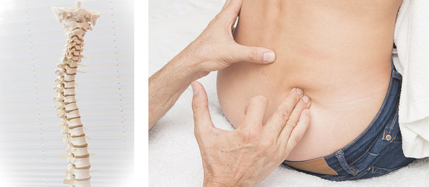 Chiropractic  カイロプラクティック